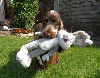 FOTKA - jsem spravny lovecky pes