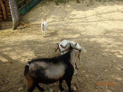 FOTKA - kozičky