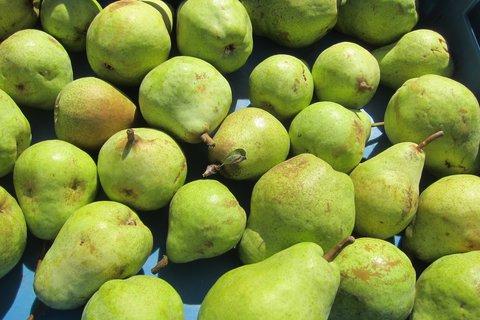 FOTKA - Barvy na trhu: zelené hrušky