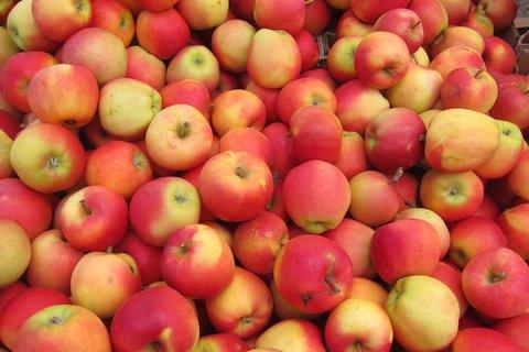 FOTKA - Barvy na trhu: červenožlutá jablka