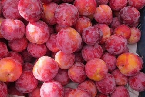 FOTKA - Barvy na trhu: růžové blumy