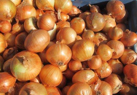 FOTKA - Barvy na trhu: zlatohnědá cibule