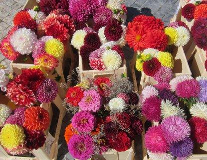 FOTKA - Barvy na trhu: kytičky mnoha barev