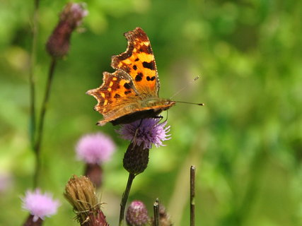 FOTKA - motýlí hody