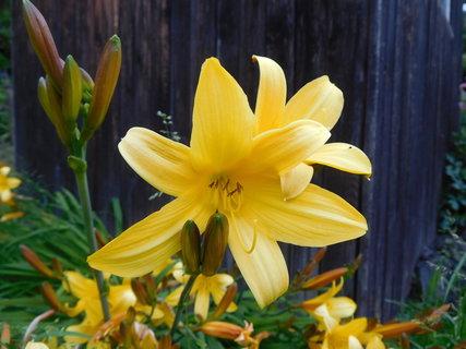 FOTKA - Květy a poupata (6.6.)
