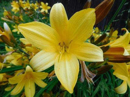 FOTKA - Pohled do květu (6.6.)