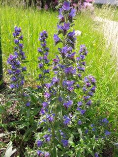 FOTKA - V trávě před mým pracovištěm (7.6.)