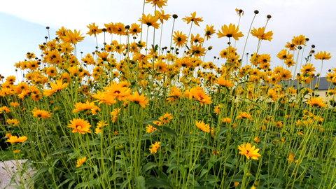 FOTKA - květiny z bylinkové zahrady na Kuksu