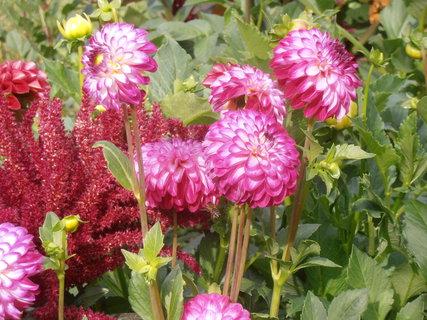 FOTKA - Co květ to originál
