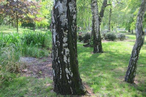 FOTKA - Park Podviní první dny v květnu