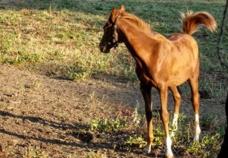 FOTKA - koník na Šumavě