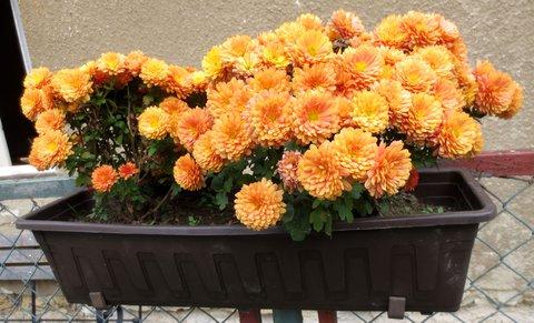 FOTKA - Kvety podzimu