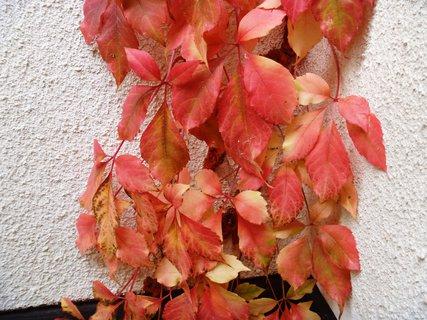 FOTKA - červené listí