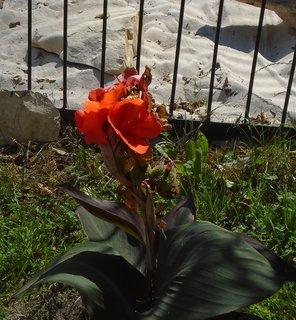 FOTKA - oranžový květ