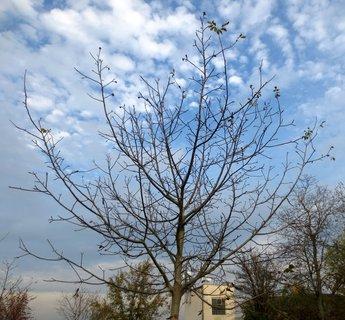 FOTKA - Mladý strom