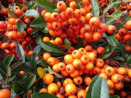 FOTKA - Plody podzimu