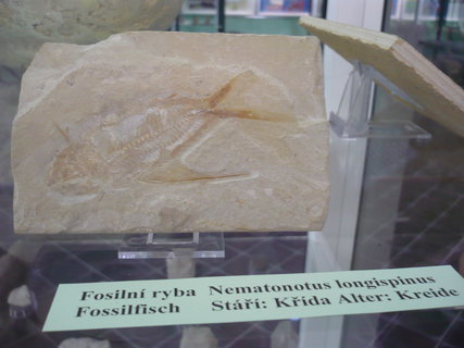 FOTKA - SOOS a muzeum ryba