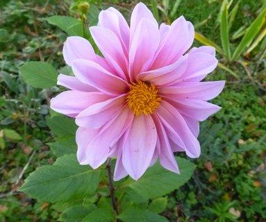 FOTKA - V říjnu kvetla