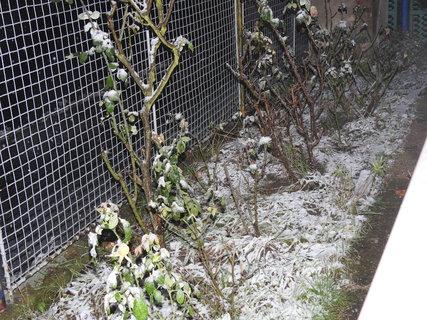 FOTKA - První sníh -foceno 12.11. v 23,30h