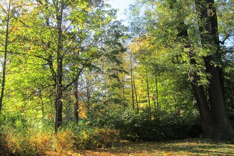 FOTKA - Na podzim...