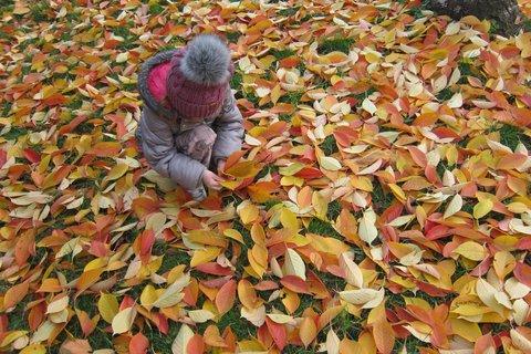 FOTKA - Radost z barevného listí
