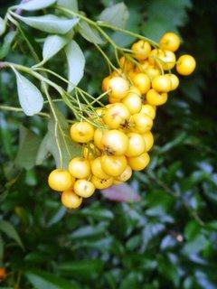 FOTKA - žluté kuličky