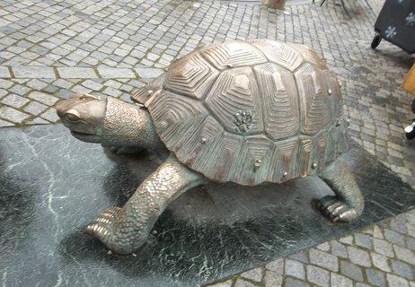 FOTKA - olomoucká želva