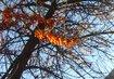 kuličky na stromě