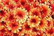 kvetla hezky