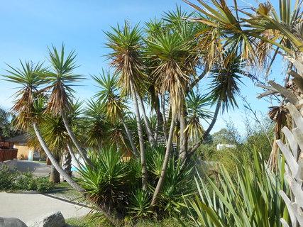 FOTKA - Palmy v parku