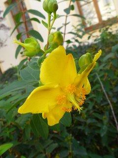 FOTKA - květ keře v listopadu focený
