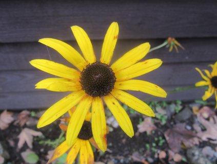 FOTKA - kvetlo v listopadu