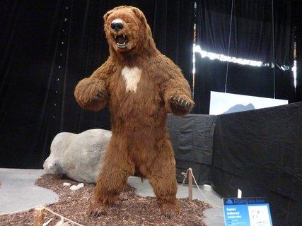 FOTKA - medvěd krátkonosý žil v oblasti Severní Ameriky