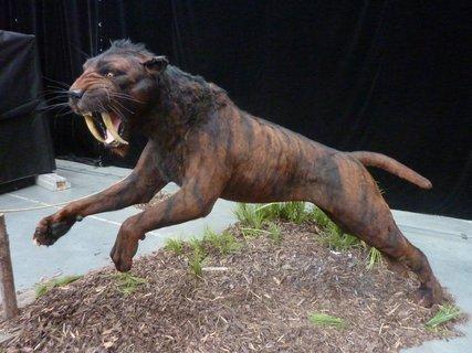 FOTKA - šavlozubec smilodon žil v Jižní a Severní Americe