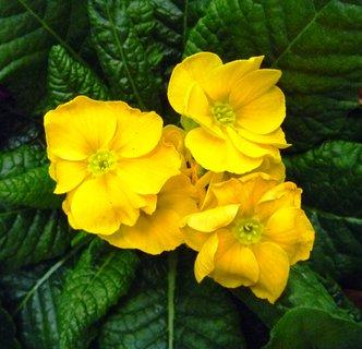 FOTKA - žlutá, letos