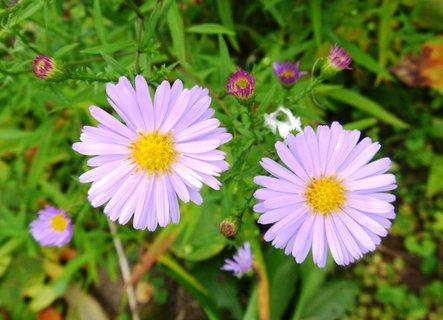 FOTKA - kvetly mi na podzim