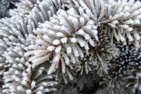 FOTKA - zima-jehličí
