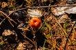 První letošní houbička