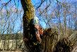 Odpočinek na stromě