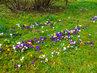 Jaro v Mariánských Lázních