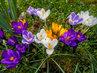 Pestíky krásných kytiček