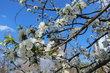 Strom s květy