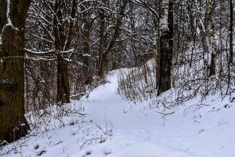 FOTKA - Bílá cestička v lese