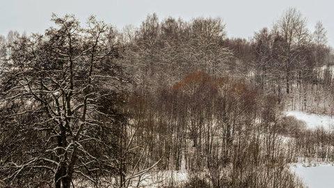 FOTKA - Krása stromů i v zimě