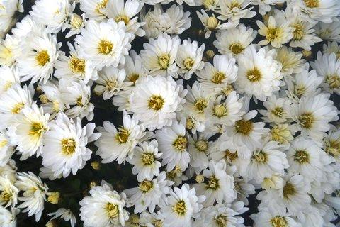 FOTKA - drobné, bílé, podzimní