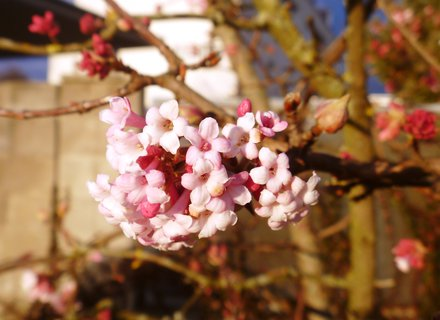 FOTKA - kvetoucí keř-minulý týden