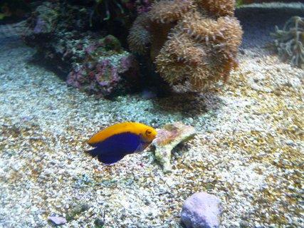 FOTKA - rybka žluto modrá