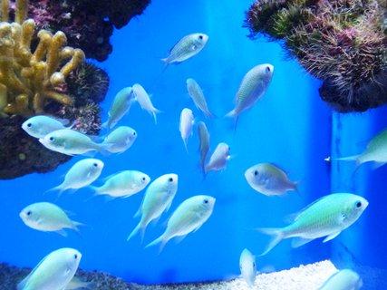 FOTKA - hejno rybek