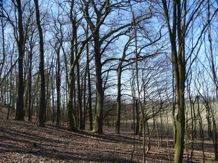 FOTKA - v lese je klid a prázdno