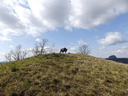 FOTKA - To není Pes baskervilský,to je Ritunka !